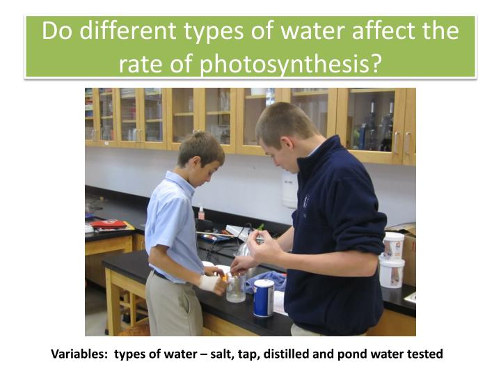 Do different types of water affect the rate of photosynthesis?