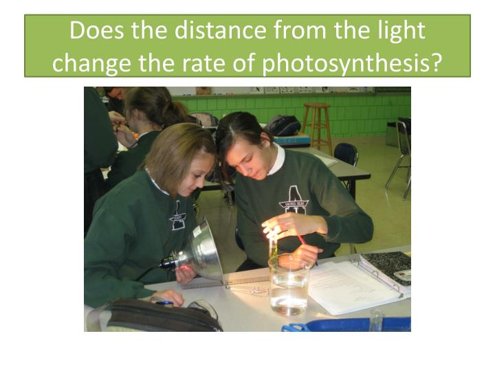Does the distance from the light change the rate of photosynthesis?