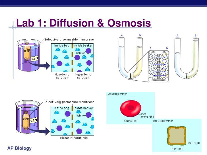 Lab 1: Diffusion & Osmosis