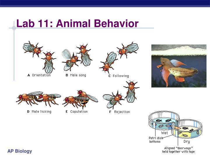 Lab 11: Animal Behavior