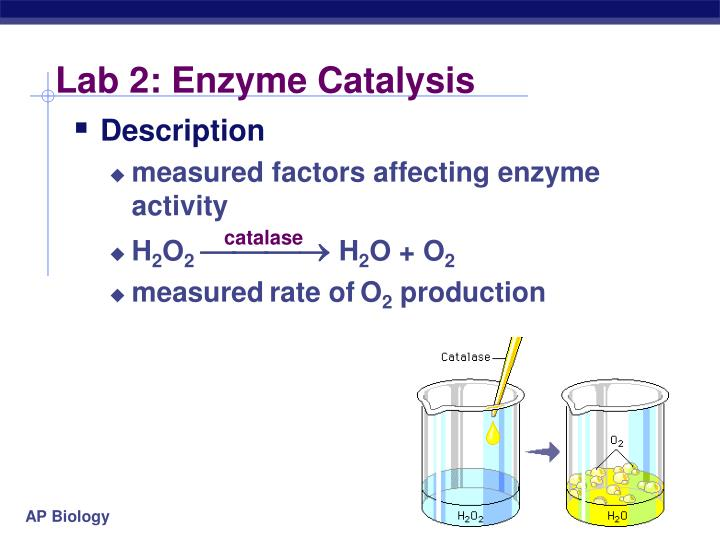 Lab 2: Enzyme Catalysis