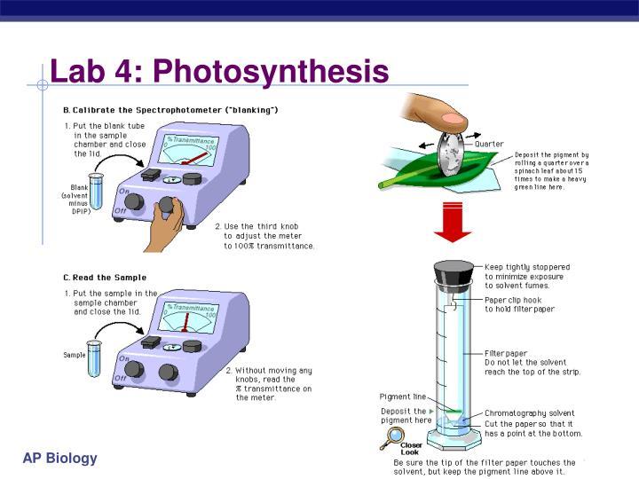 Lab 4: Photosynthesis