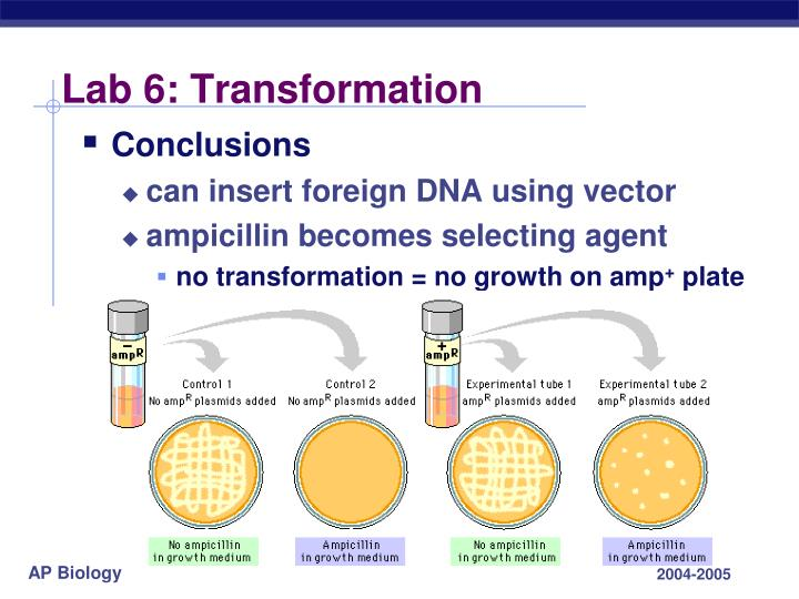 Lab 6: Transformation