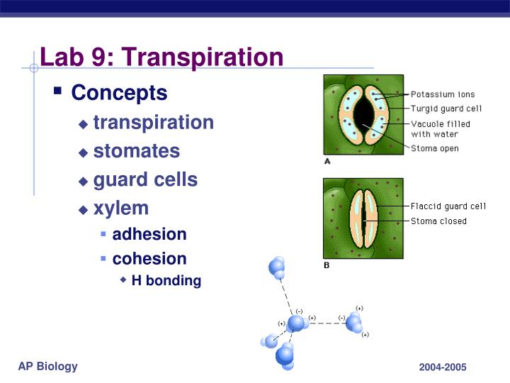 Lab 9: Transpiration