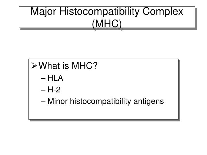 Major histocompatibility complex mhc