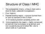 structure of class i mhc1