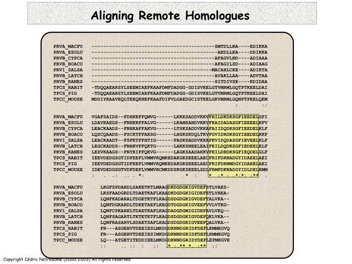 Aligning Remote Homologues