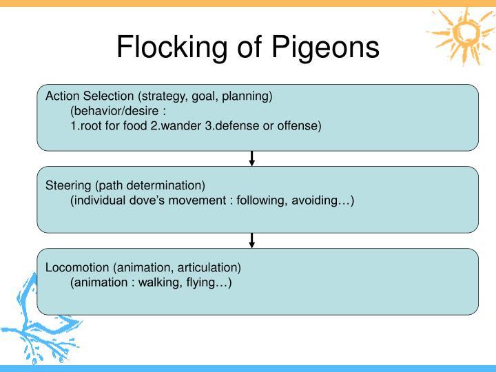 Flocking of Pigeons