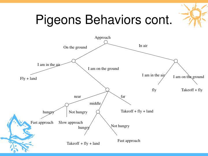 Pigeons Behaviors cont.