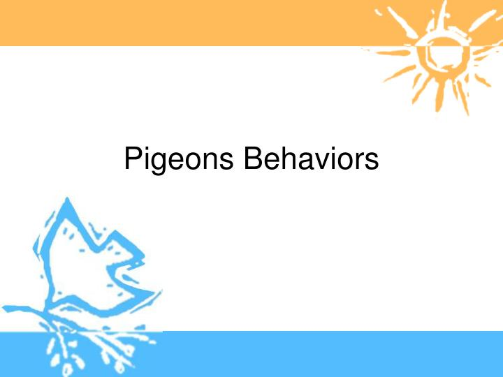 Pigeons Behaviors