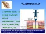 v a intramuscular
