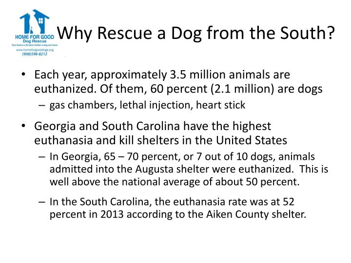 Why rescue a dog from the south