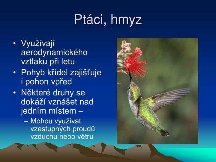 Ptáci, hmyz