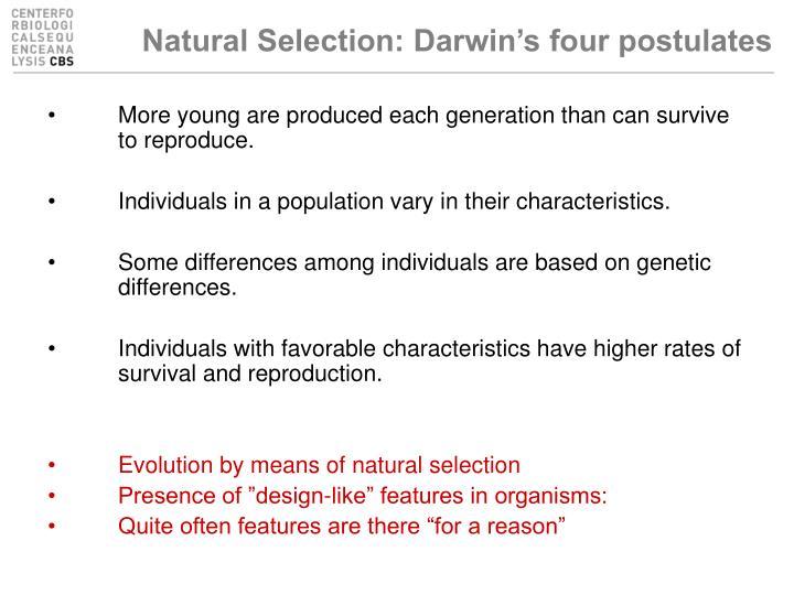 Natural Selection: Darwin's four postulates