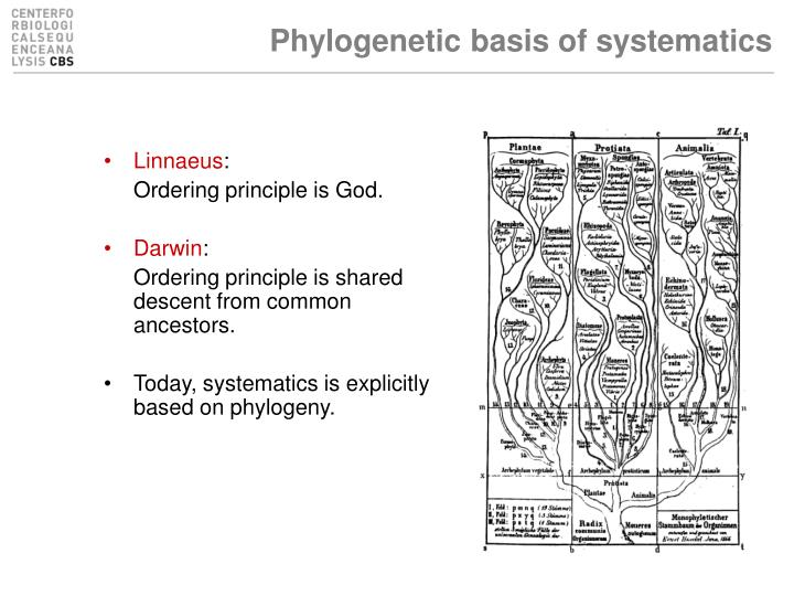 Phylogenetic basis of systematics