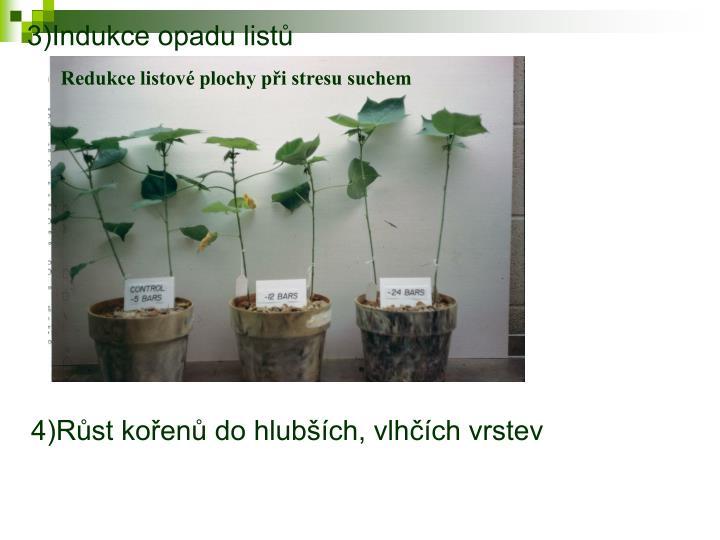 3)Indukce opadu listů