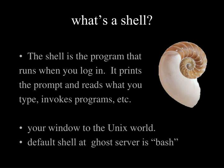 what's a shell?