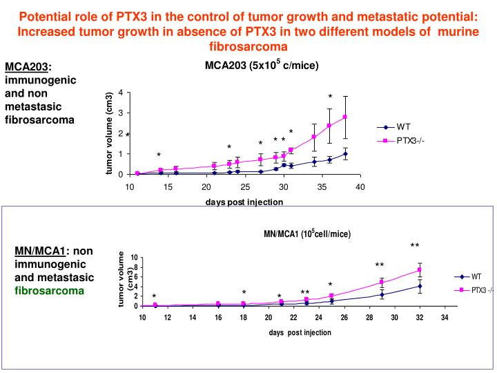 Potential role of PTX3 in the control of tumor growth and metastatic potential: