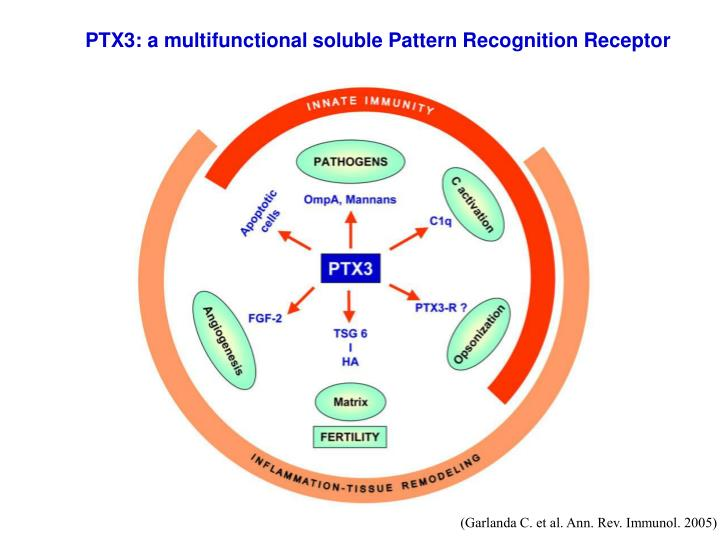 PTX3: a multifunctional soluble Pattern Recognition Receptor