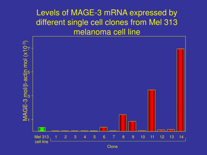 Levels of MAGE-3 mRNA expressed by different single cell clones from Mel 313 melanoma cell line