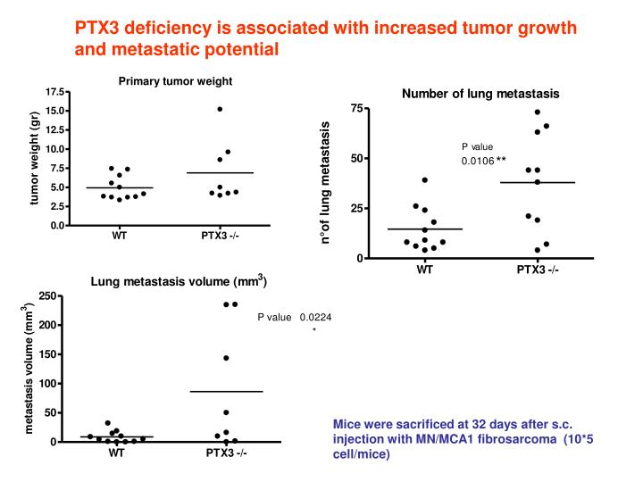 PTX3 deficiency is associated with increased tumor growth and metastatic potential