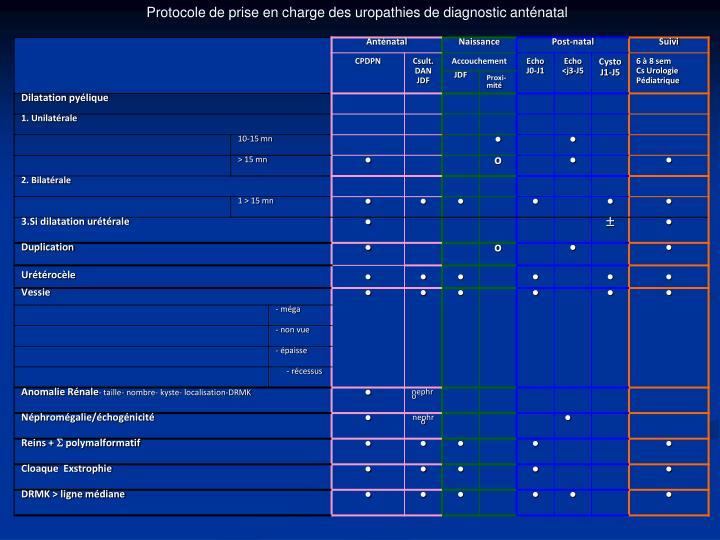 Protocole de prise en charge des uropathies de diagnostic anténatal