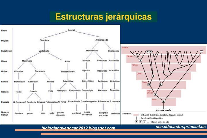 Estructuras jerárquicas