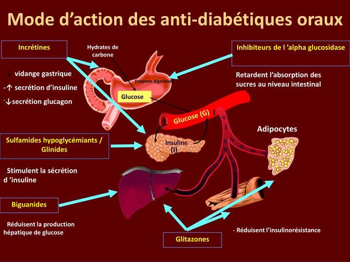 Mode d'action des anti-diabétiques oraux