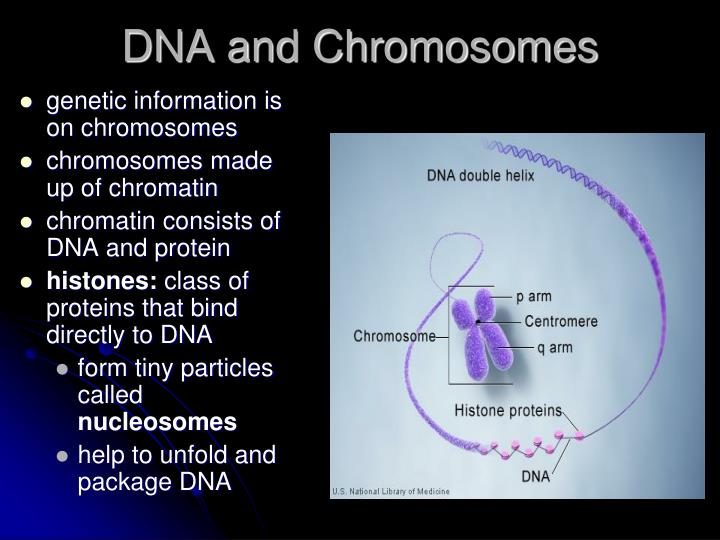 genetic information is on chromosomes