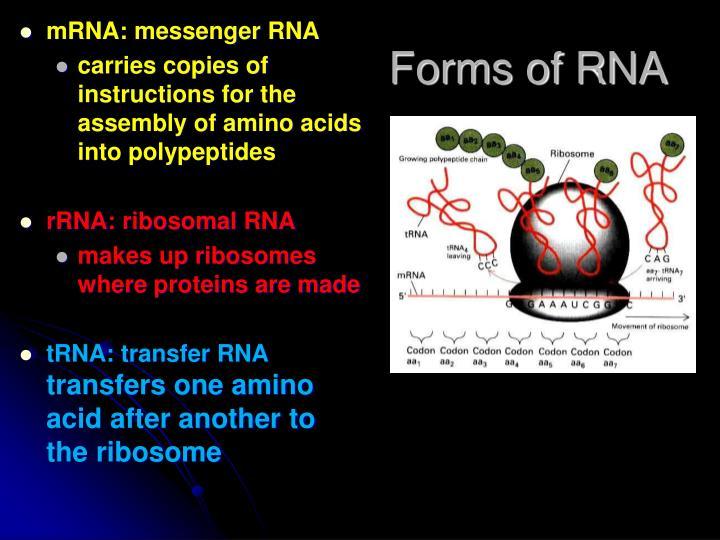 mRNA: messenger RNA