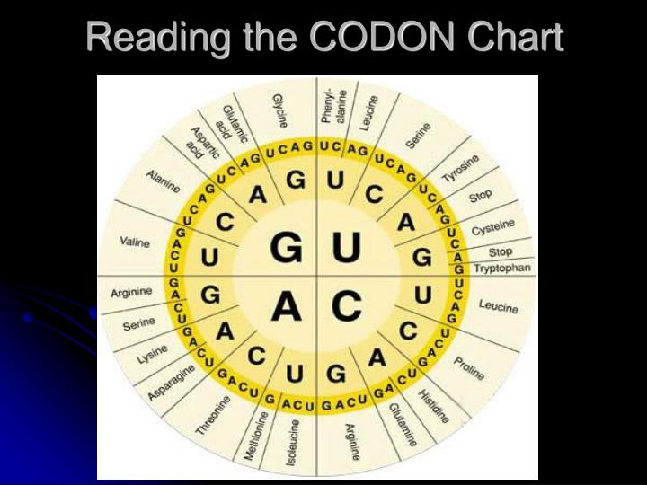 Reading the CODON Chart