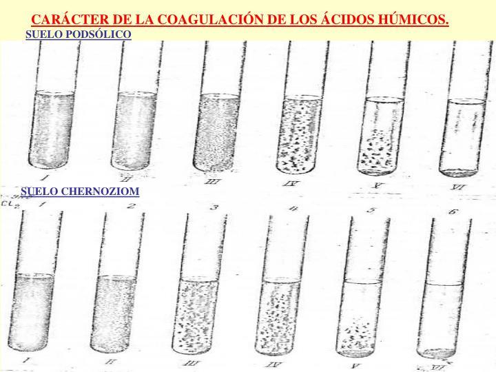 CARÁCTER DE LA COAGULACIÓN DE LOS ÁCIDOS HÚMICOS.