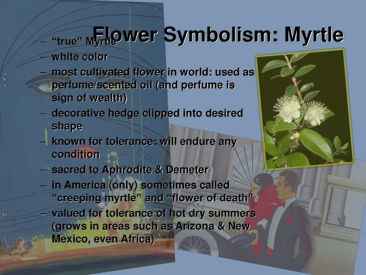 Flower Symbolism: Myrtle