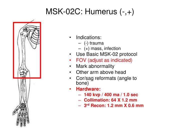 MSK-02C: Humerus (-,+)