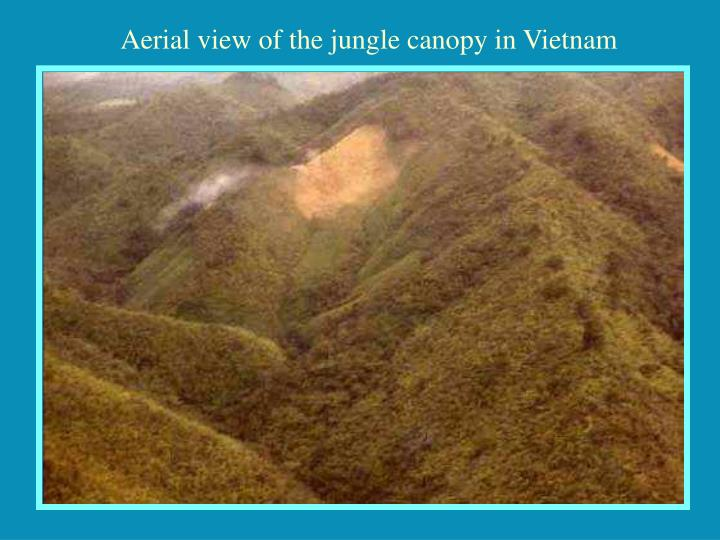 Aerial view of the jungle canopy in Vietnam