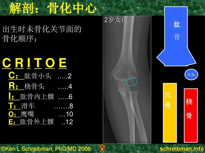 解剖:骨化中心