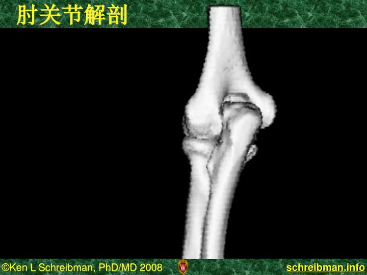 肘关节解剖