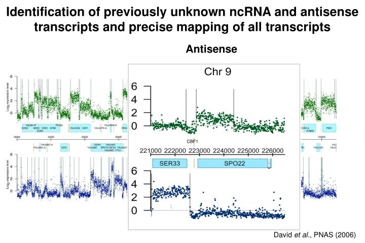 Identification of previously unknown ncRNA and antisense transcripts and precise mapping of all transcripts