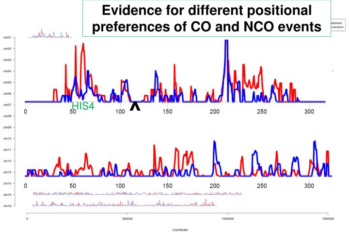 Evidence for different positional preferences of CO and NCO events
