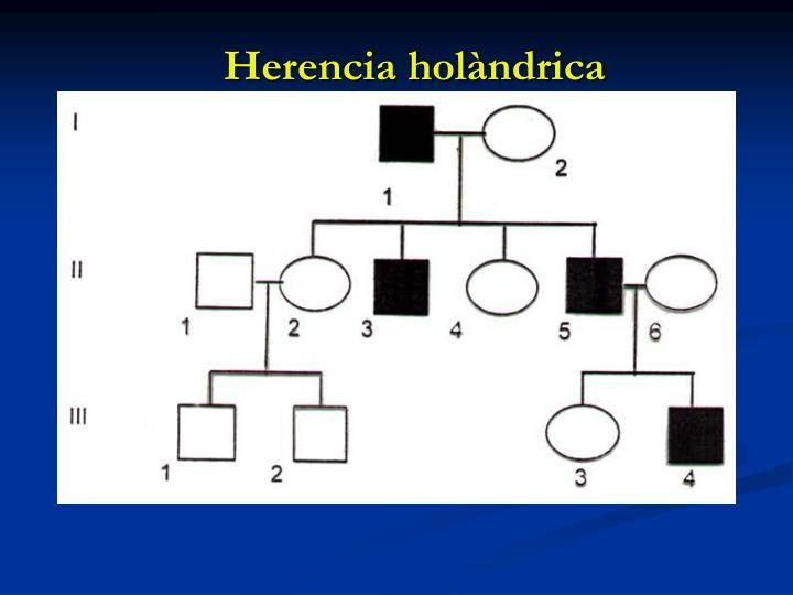 Herencia holàndrica