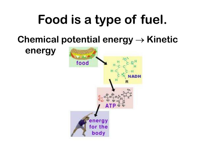 Food is a type of fuel.