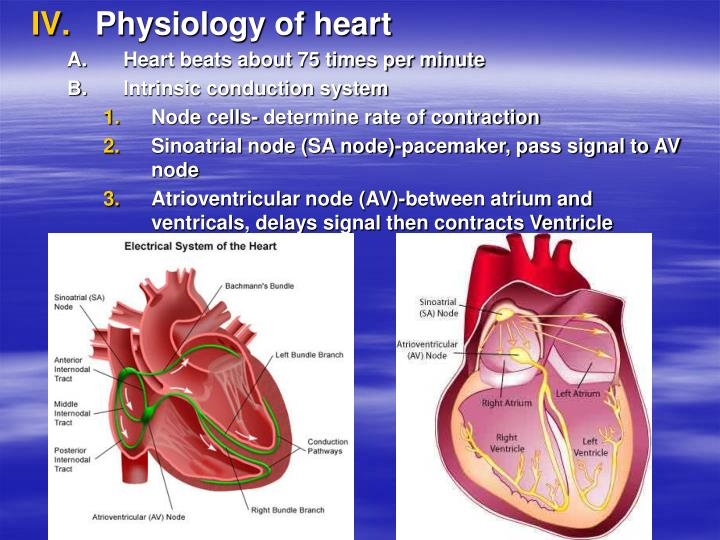 Physiology of heart