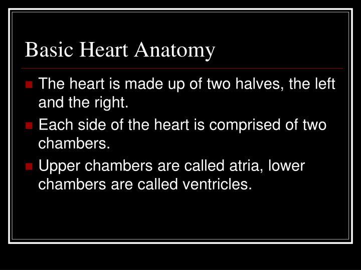 Basic Heart Anatomy
