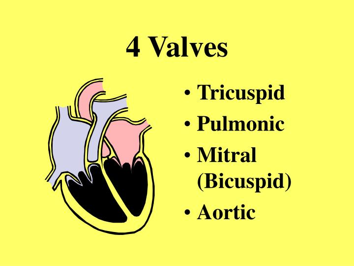 4 Valves
