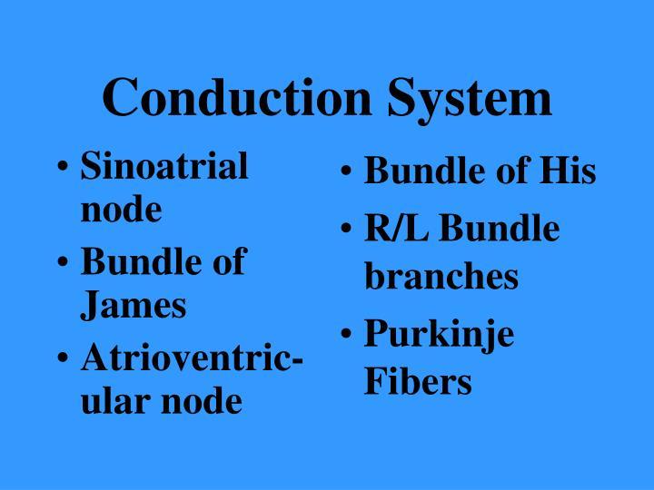 Sinoatrial node