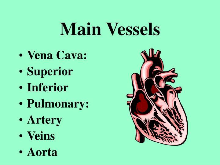 Main Vessels