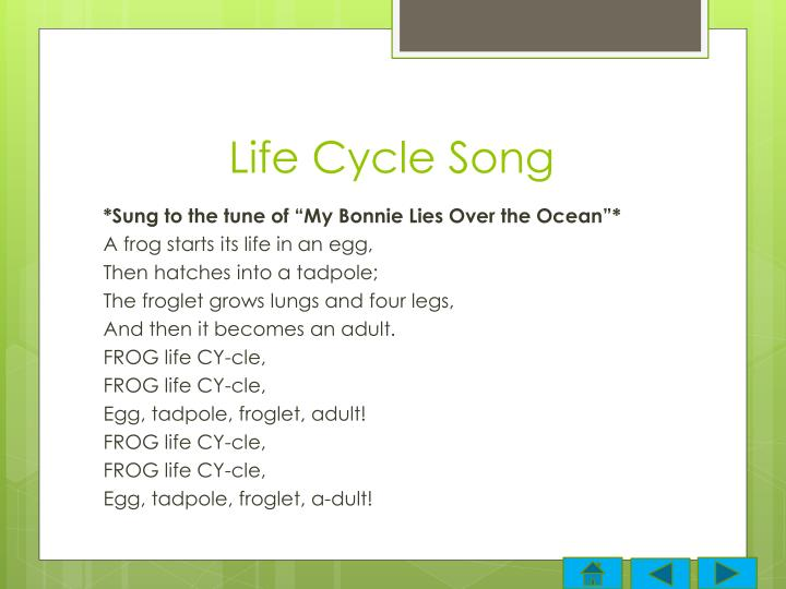 Life Cycle Song