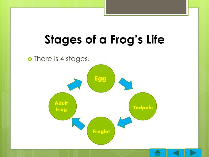 Stages of a frog s life