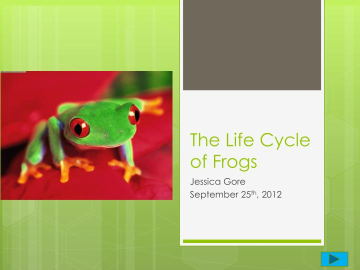 The life cycle of frogs