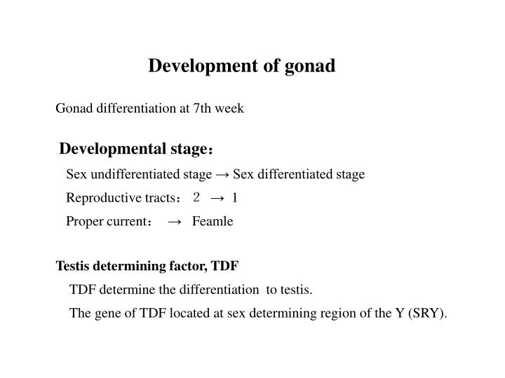 Development of gonad